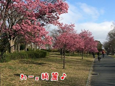 IMG_5545.jpg