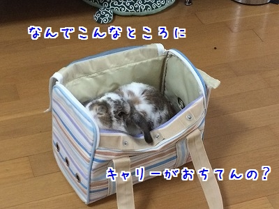 IMG_5868.jpg
