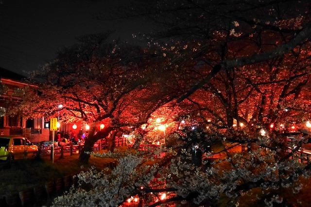 2017-04-02 誉桜 002