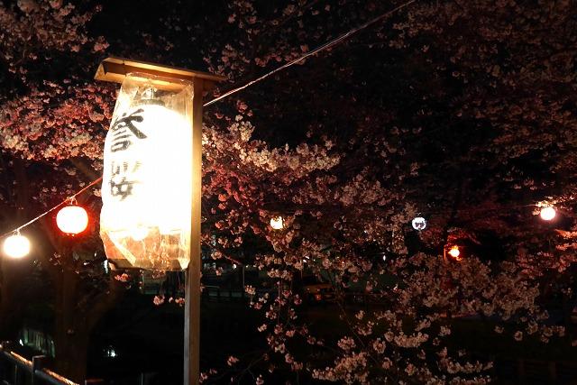 2017-04-02 誉桜 017