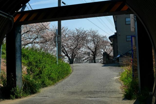 2017-04-05 川越の桜 081