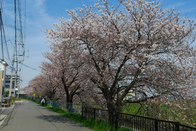 2017-04-05 川越の桜 076