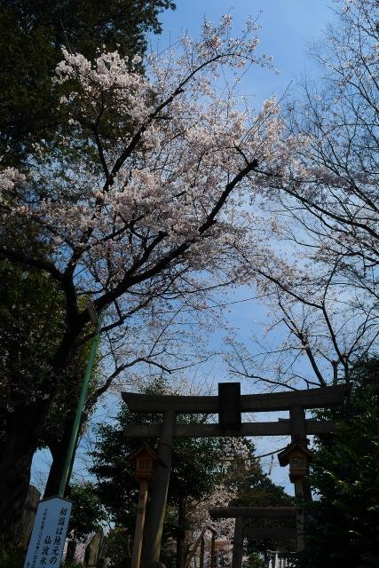 2017-04-05 川越の桜 049