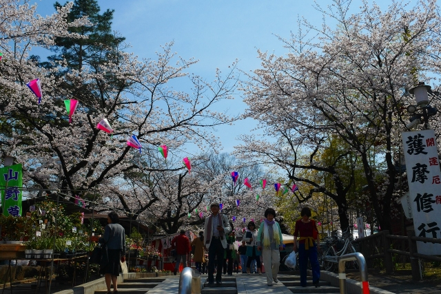2017-04-05 川越の桜 165