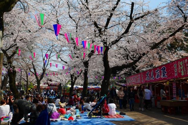 2017-04-05 川越の桜 155