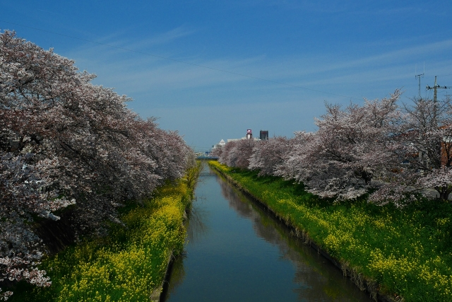 2017-04-05 川越の桜 113