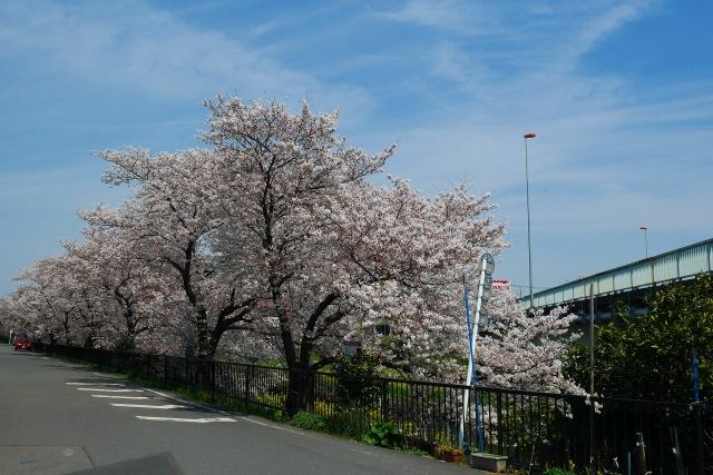 2017-04-05 川越の桜 086