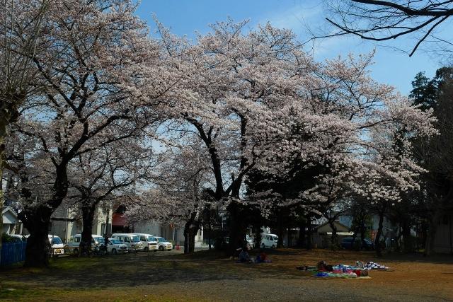 2017-04-05 川越の桜 169