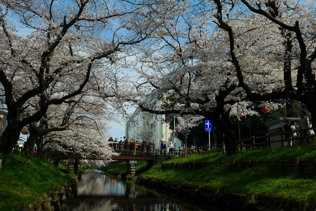 2017-04-05 川越の桜 232