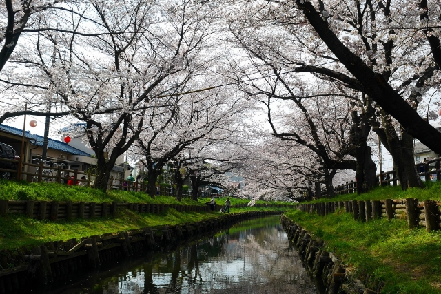 2017-04-05 川越の桜 226