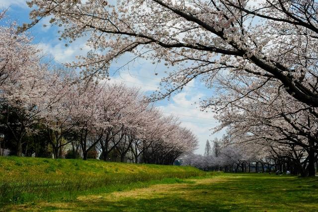 2017-04-06 川越水上公園 037