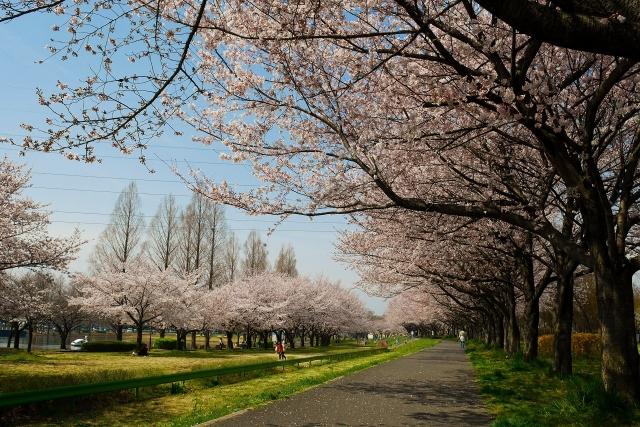 2017-04-06 川越水上公園 007