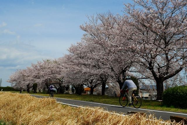 2017-04-06 川越水上公園 134