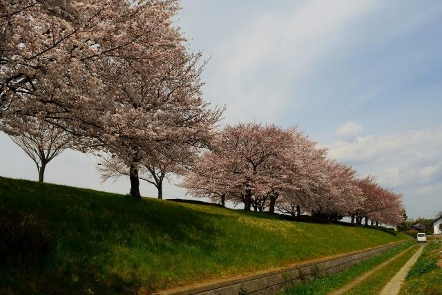 2017-04-06 川越水上公園 148