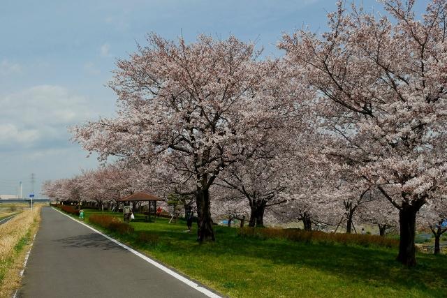 2017-04-06 川越水上公園 144