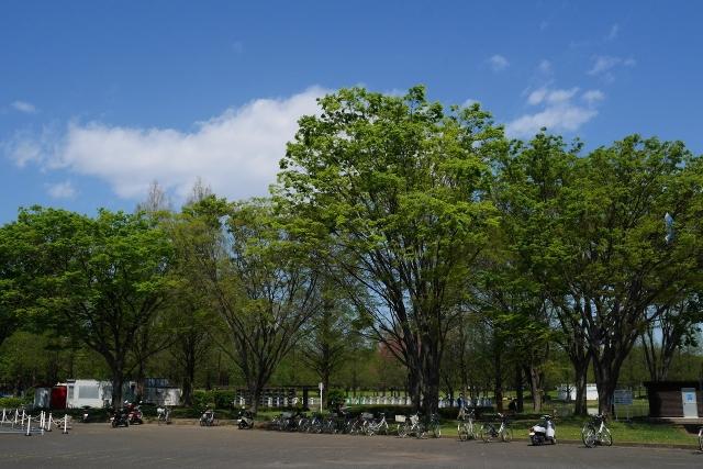 2017-04-19 川越水上公園 八重桜 098