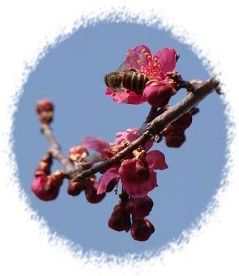 梅とミツバチ型抜き