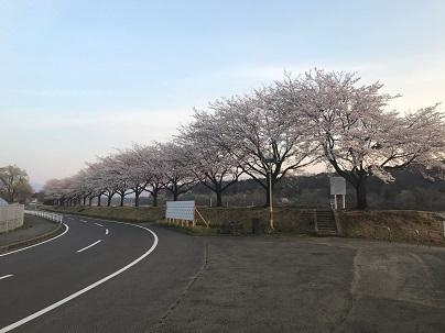 20170416桜並木