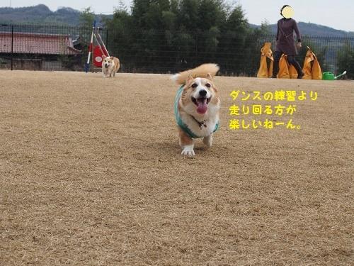 走り回りたい