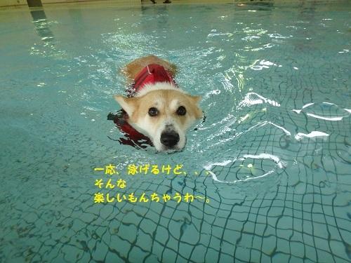 泳げるけど
