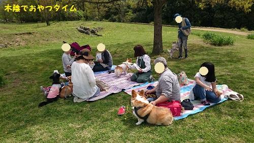 29ピクニック
