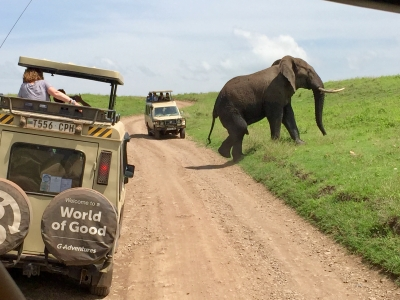 tanzania_elephant.jpg
