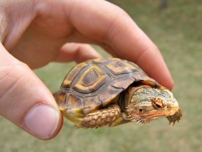 tortoise_2017.jpg