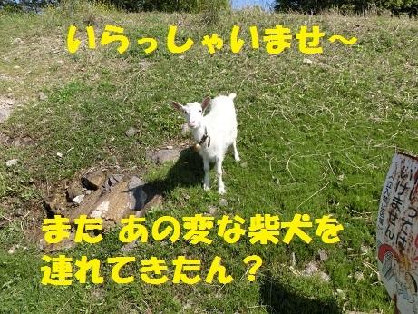 CIMG0303.jpg