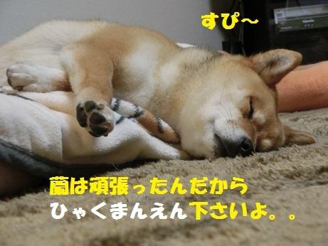 CIMG0327.jpg