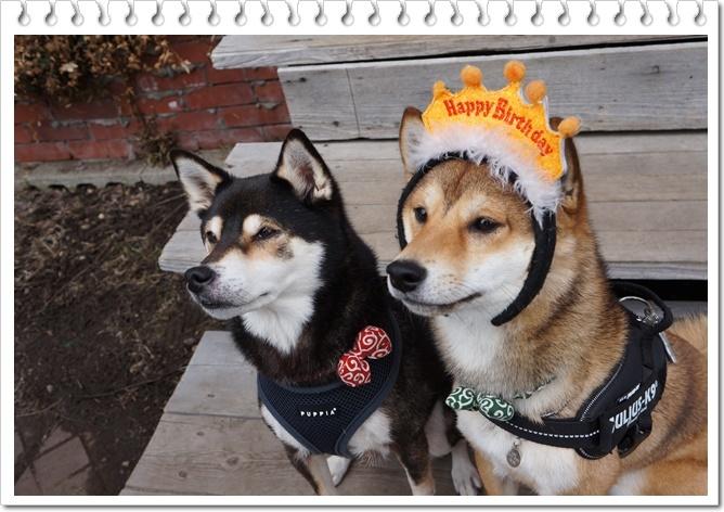 太郎の誕生日①