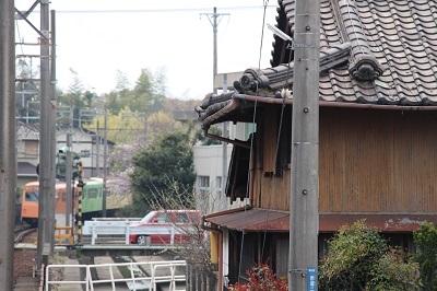 56赤堀桜400