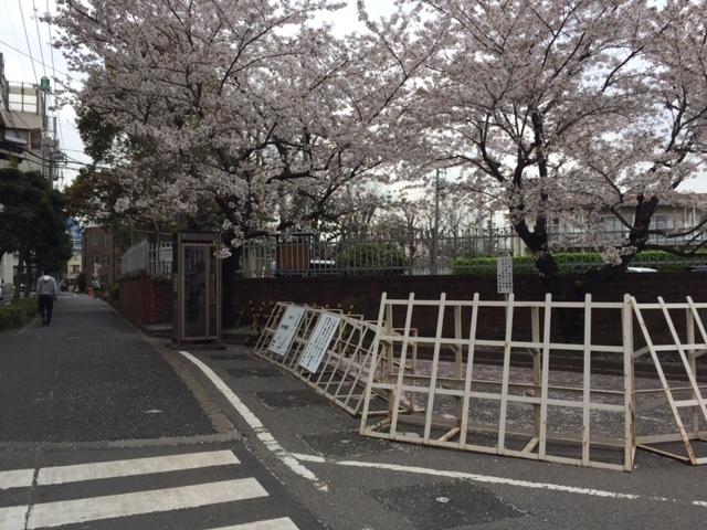 東京拘置所の桜