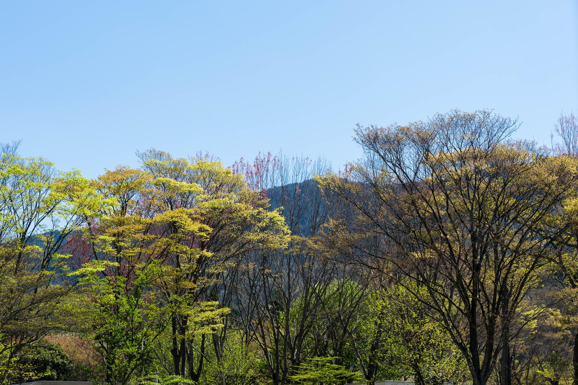 2017芽吹く木々