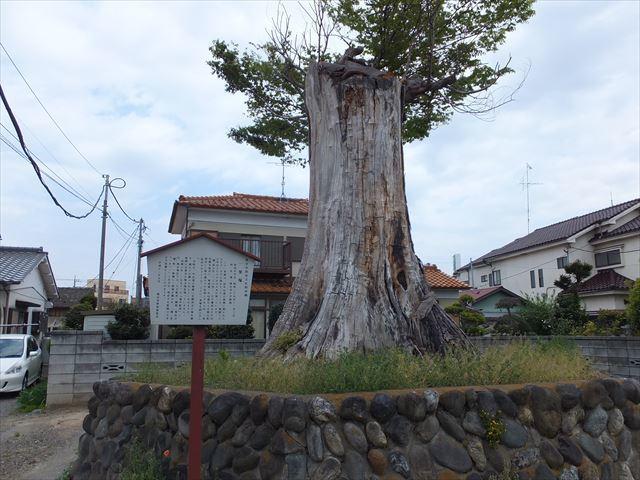 11_新島の一里塚17_R