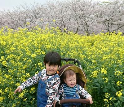 桜と菜の花 ゆうととりく 3
