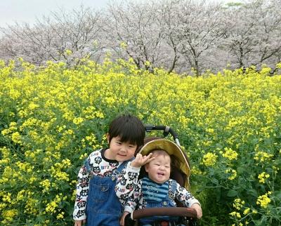 桜と菜の花 ゆうととりく 2