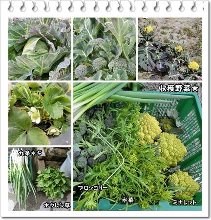 収穫野菜など