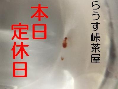 IMG_1137 定休