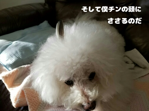 fc2_2017-02-26_09-11-02-662.jpg