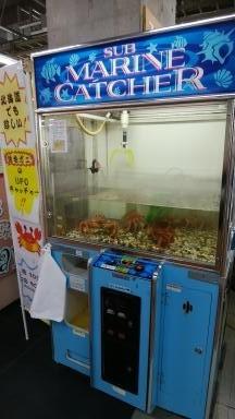 活毛ガニUFOキャッチャー