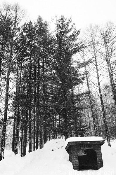 170315北海道に行ってみた4