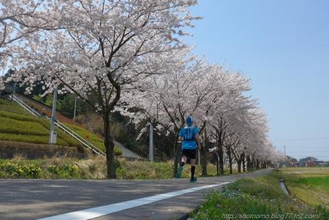140414SAKURA_15.jpg
