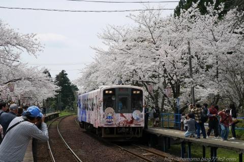170416SAKURA_008.jpg