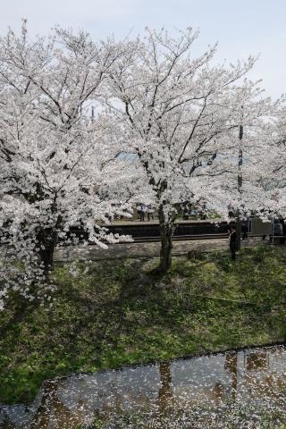 170416SAKURA_011.jpg