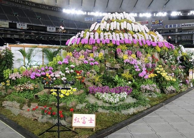 ディスプレイ審査部門オープンクラス 優良賞 日本洋蘭農業協同組合