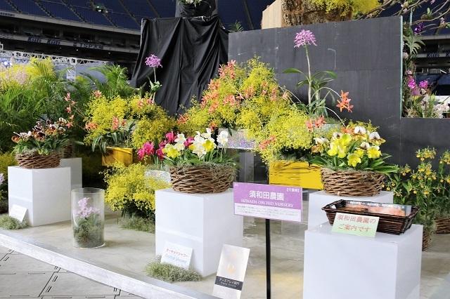 ディスプレイ審査部門 オープンクラス トロフィー賞 須和田農園