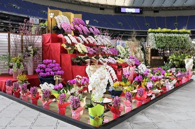 ディスプレイ審査部門 オープンクラス 奨励賞 埼玉県洋蘭生産者組合
