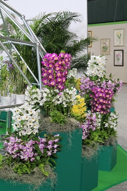 特別展示「光を愛する蘭と地中に息づく蘭(デンドロビューム)