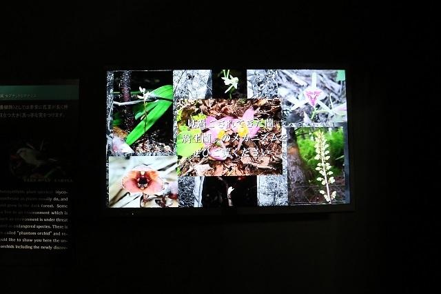 特別展示「光を愛する蘭と地中に息づく蘭」