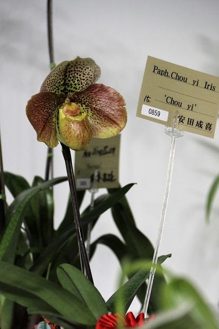 """Paph.Chou Yi Iris """"Chou Yi"""""""